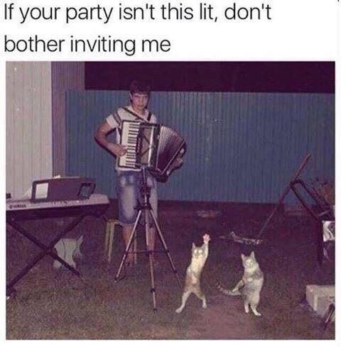 meme about parties with cursed pic of guy playing the accordion to two dancing cats