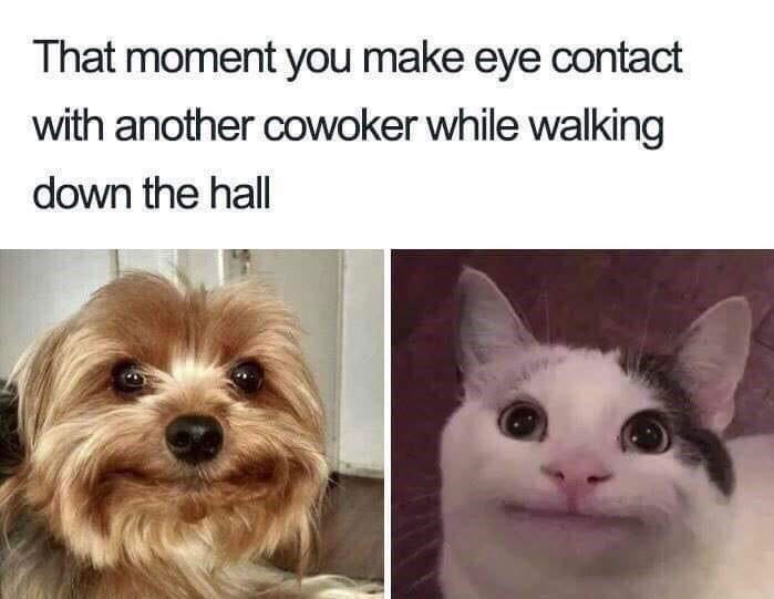 "Caption that reads, ""That moment you make eye contact with another coworker while walking down the hall"" above pics of an awkward dog and polite cat"