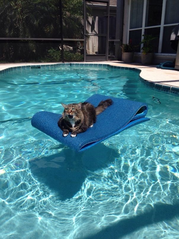 pic of a cat stuck on a floating mattress in the middle of a pool