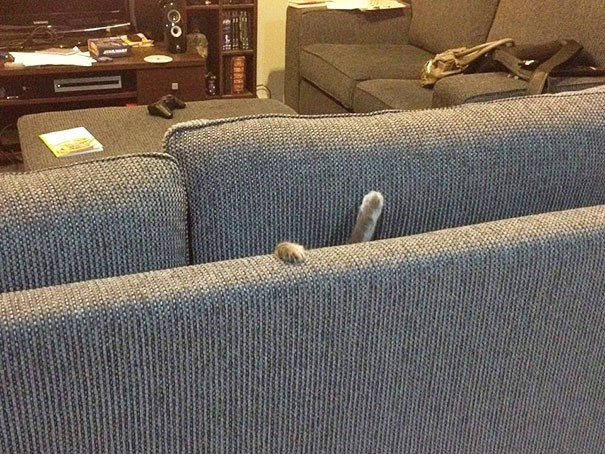 Pic of a cat who got stuck in between the couch cushions