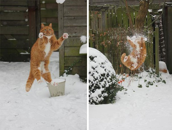 pic of a cat before and after being hit by a snowball