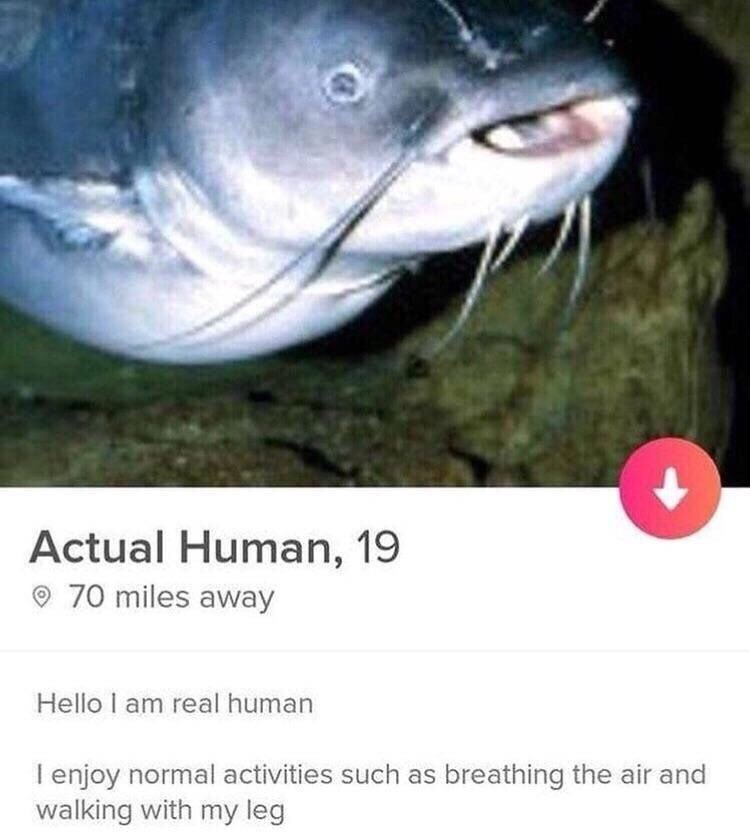 Tinder profile of a fish