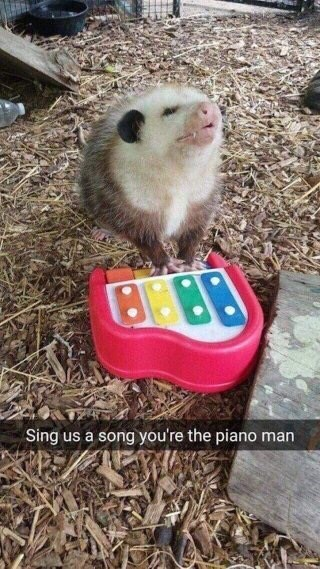 snapshot of a possum playing a tiny toy piano