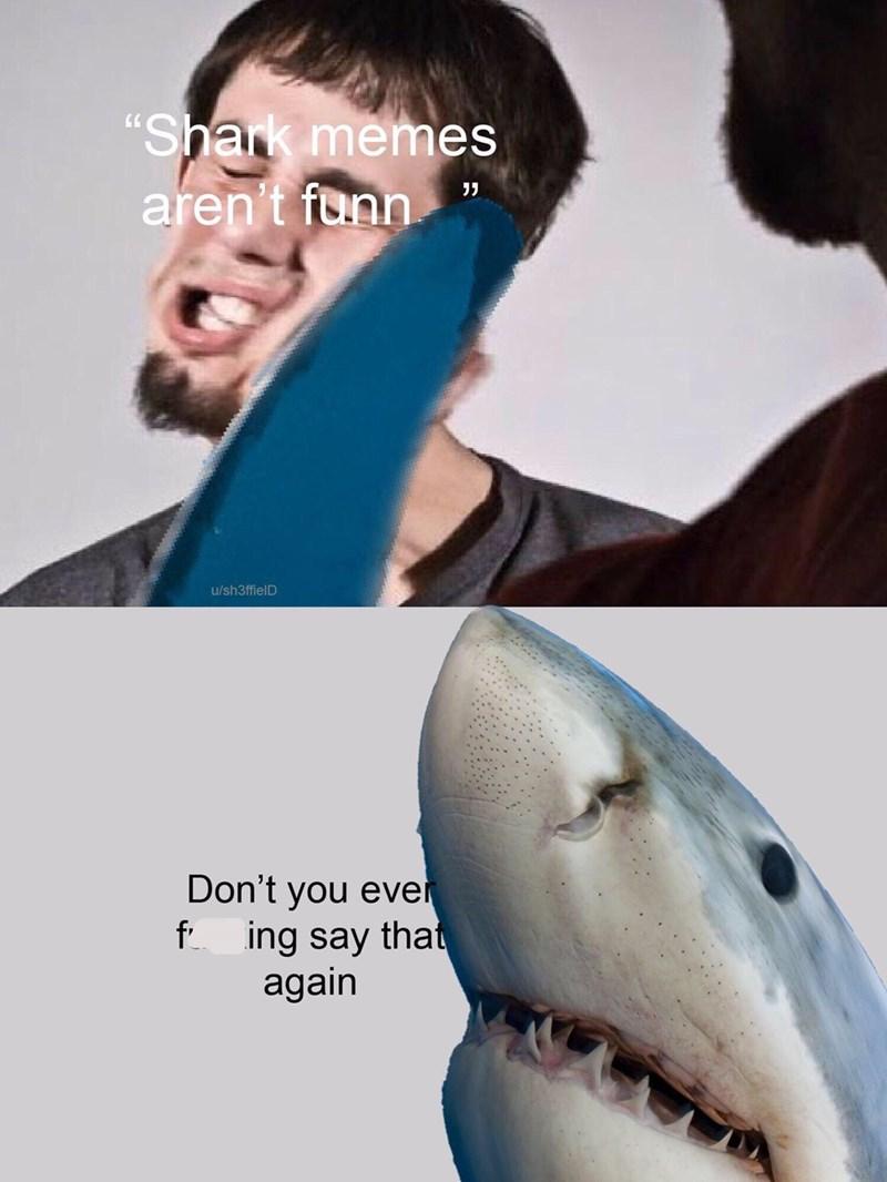 meme of a shark slapping a man for saying shark memes aren't funny