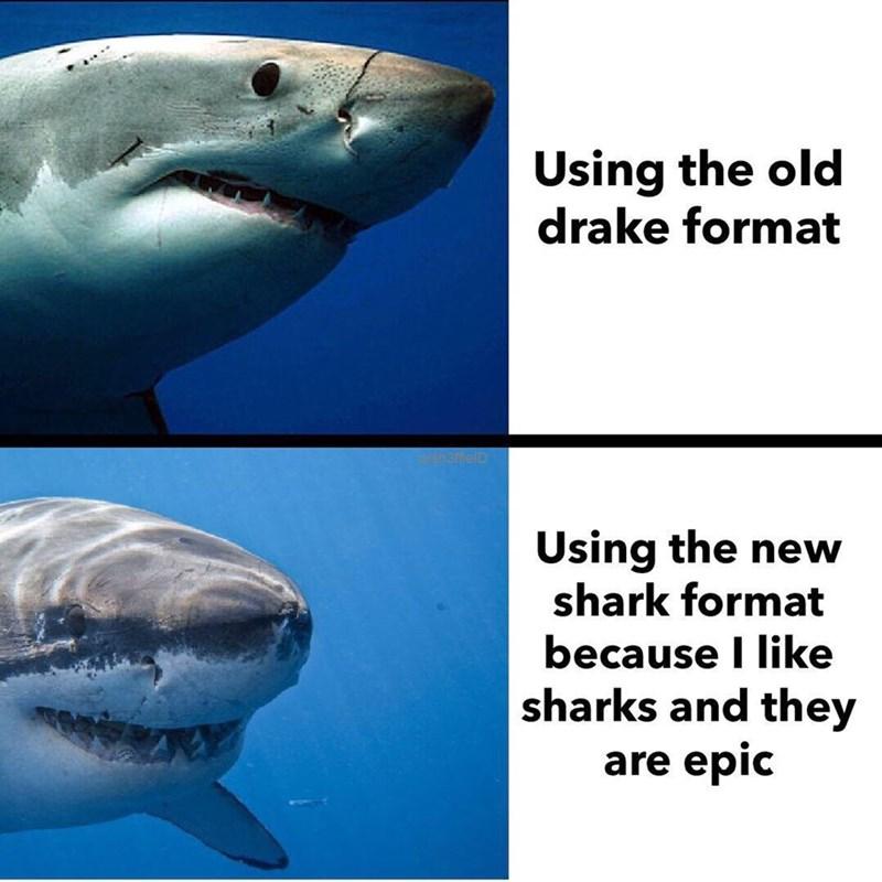 Drake Hotline meme but with shark pics