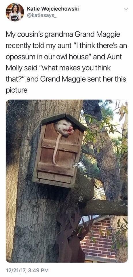 pic of a possum stuck inside an owl house