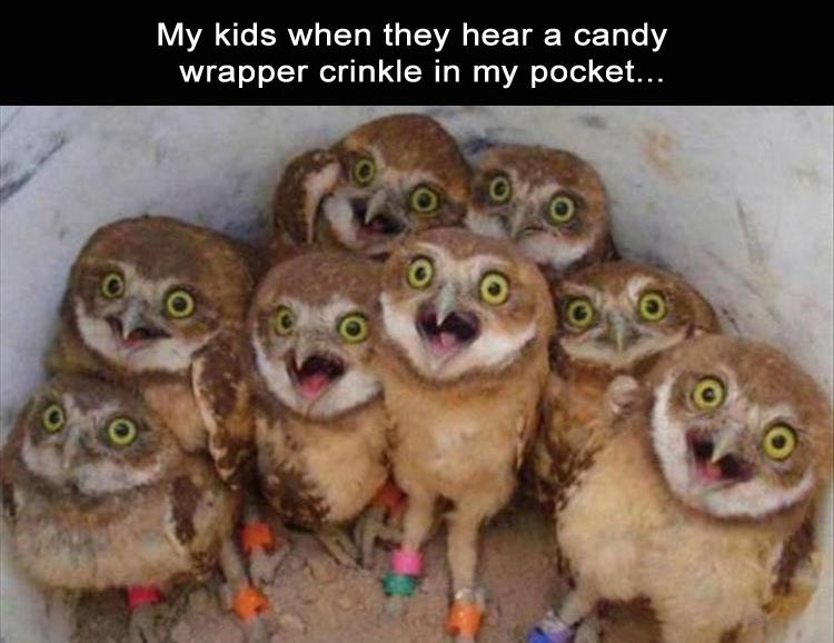 Vertebrate - My kids when they hear a candy wrapper crinkle in my pocket...