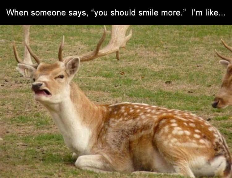 """Terrestrial animal - When someone says, """"you should smile more."""" I'm like..."""