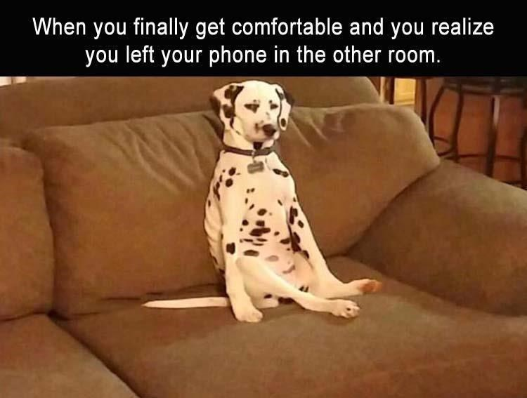 Dalmatian - When you finally get comfortable and you realize you left your phone in the other room.