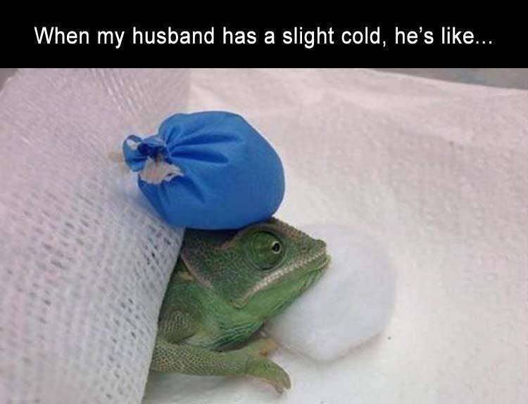 Lizard - When my husband has a slight cold, he's like...