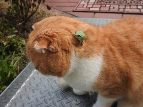 Cat with a frog