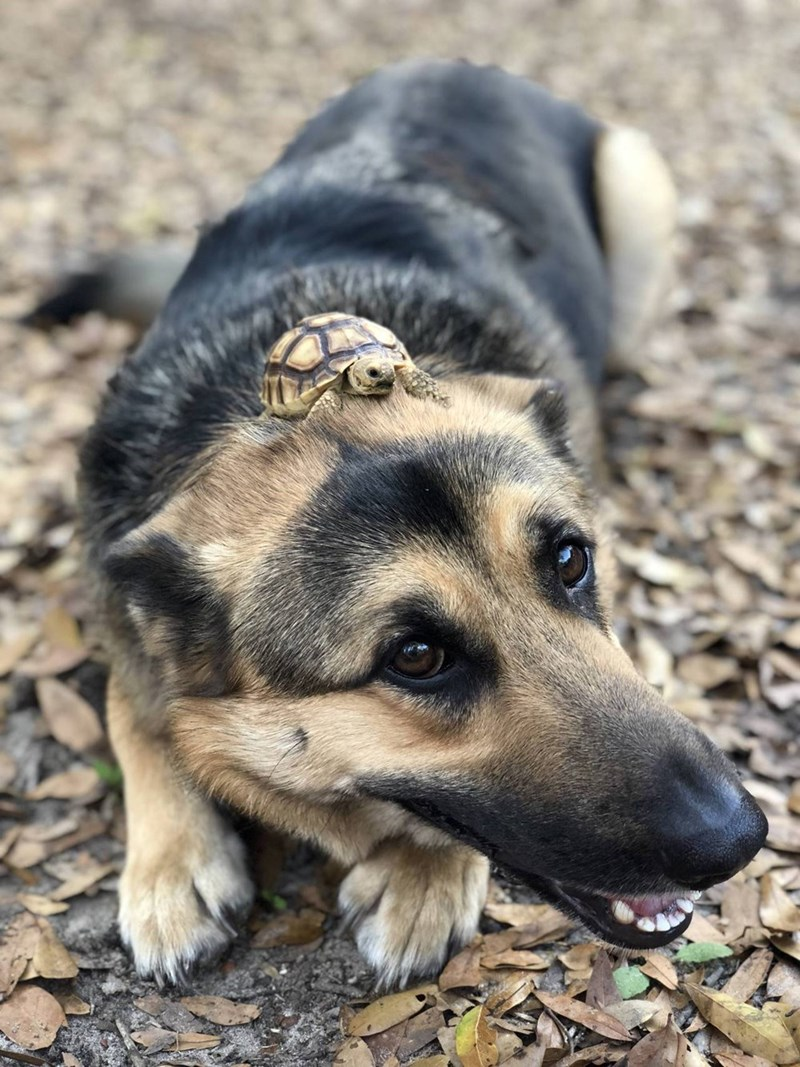 dog with a turtle hat