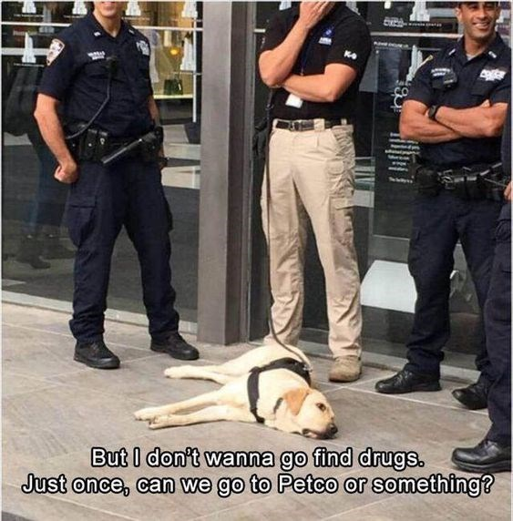 wholesome meme - Police dog - 4 But I don't wanna go find drugs. Just once, can we go to Petco or something?