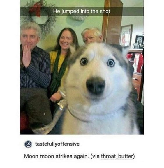 wholesome meme - Dog - He jumped into the shot tastefullyoffensive Moon moon strikes again. (via throat butter)