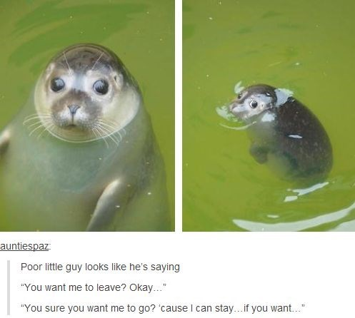 """wholesome meme - Marine mammal - auntiespaz Poor little guy looks like he's saying """"You want me to leave? Okay..."""" """"You sure you want me to go? 'cause I can stay...if you want... 1"""