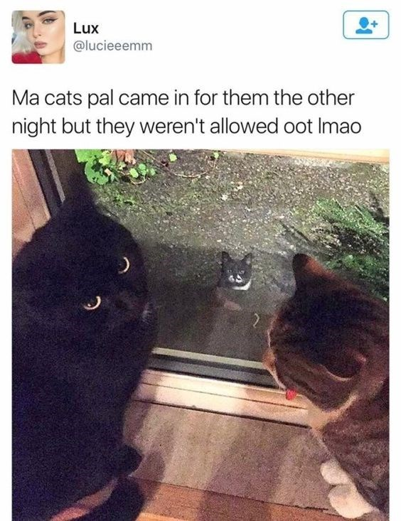wholesome meme - Cat - Lux @lucieeemm Ma cats pal came in for them the other night but they weren't allowed oot Imao