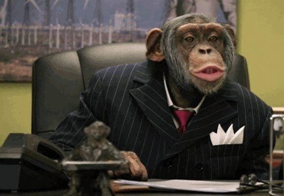 funny animals - Common chimpanzee