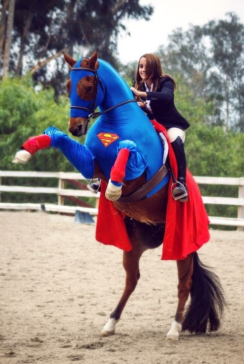 funny animals - Equestrian vaulting