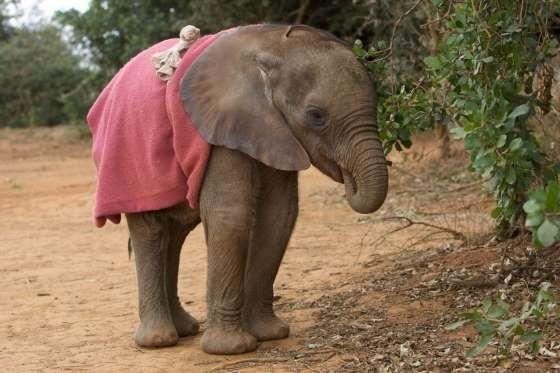 funny animals - Elephant