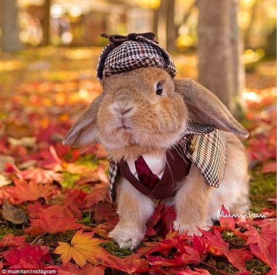 funny animals - Domestic rabbit - Muimikam omumitan/Instagram