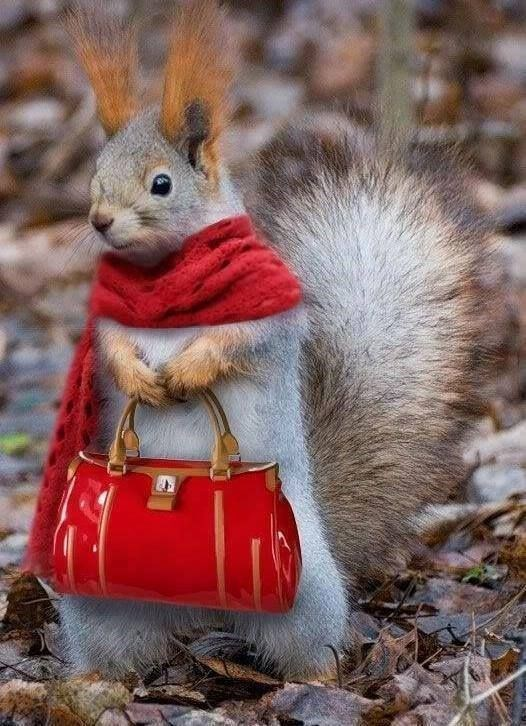 funny animals - Squirrel