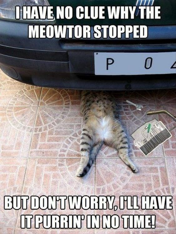 Cat - OHAVE NO CLUE WHY THE MEOWTOR STOPPED P O BUT DONTWORRY,LL HAVE IT PURRIN' IN NO TIME! 1.30