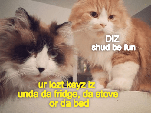Search Party Organized By Your Kittehz
