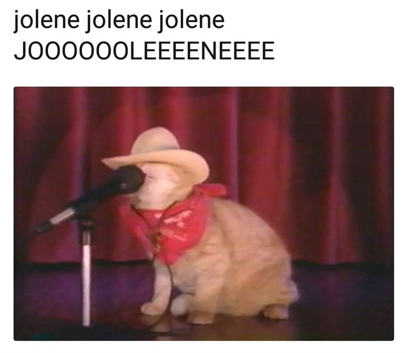 """pic of cat wearing a cowboy hat performing Dolly Parton's song """"Jolene"""""""