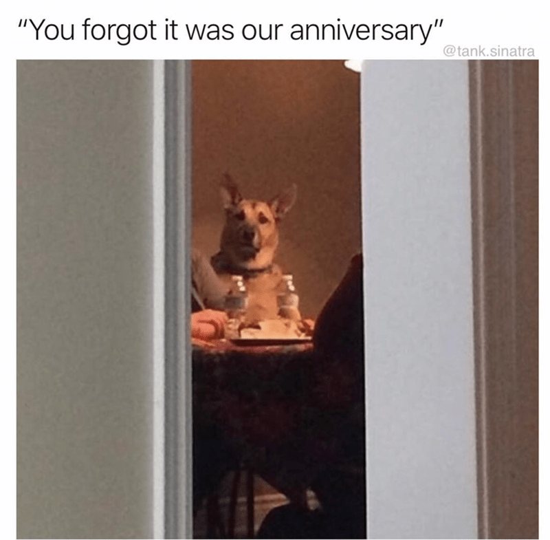 pic of dog sitting sadly by a set dinner table after owner forgot about their anniversary