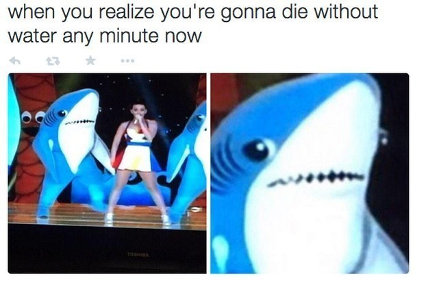 meme about Left Shark from the Katy Perry Super Bowl performance