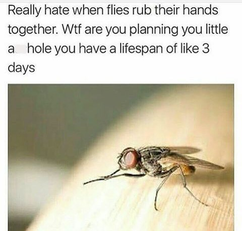 "Caption that reads, ""Really hate when flies rub their hands together. WTF are you planning you little a**hole, you have a lifespan of like three days"" above a pic of a fly"