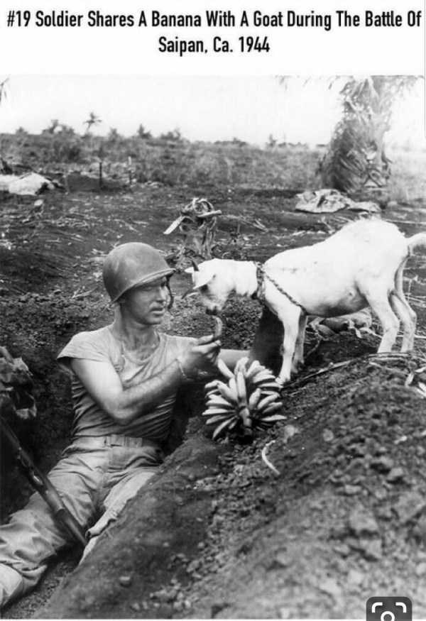 Adaptation - #19 Soldier Shares A Banana With A Goat During The Battle Of Saipan, Ca. 1944