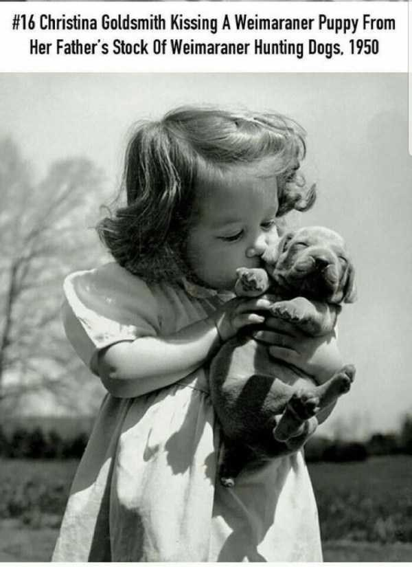 Photograph - #16 Christina Goldsmith Kissing A Weimaraner Puppy From Her Father's Stock 0Of Weimaraner Hunting Dogs. 1950