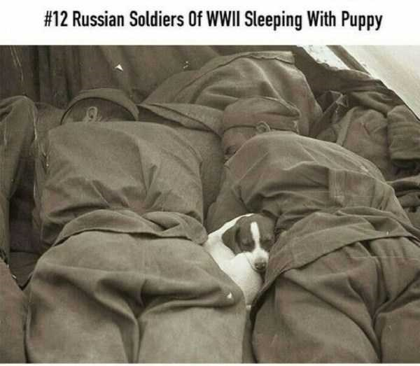 Text - #12 Russian Soldiers Of WWII Sleeping With Puppy