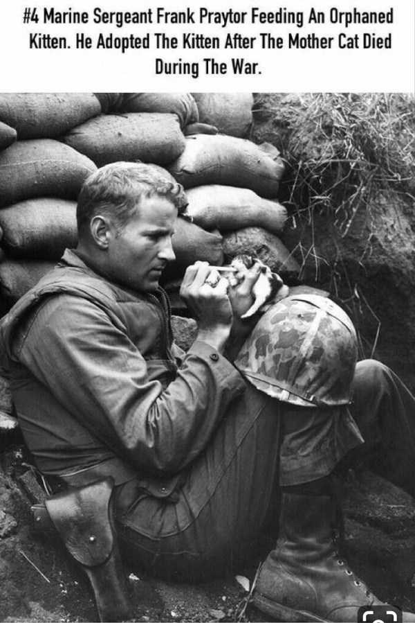 Adaptation - #4 Marine Sergeant Frank Praytor Feeding An Orphaned Kitten. He Adopted The Kitten After The Mother Cat Died During The War