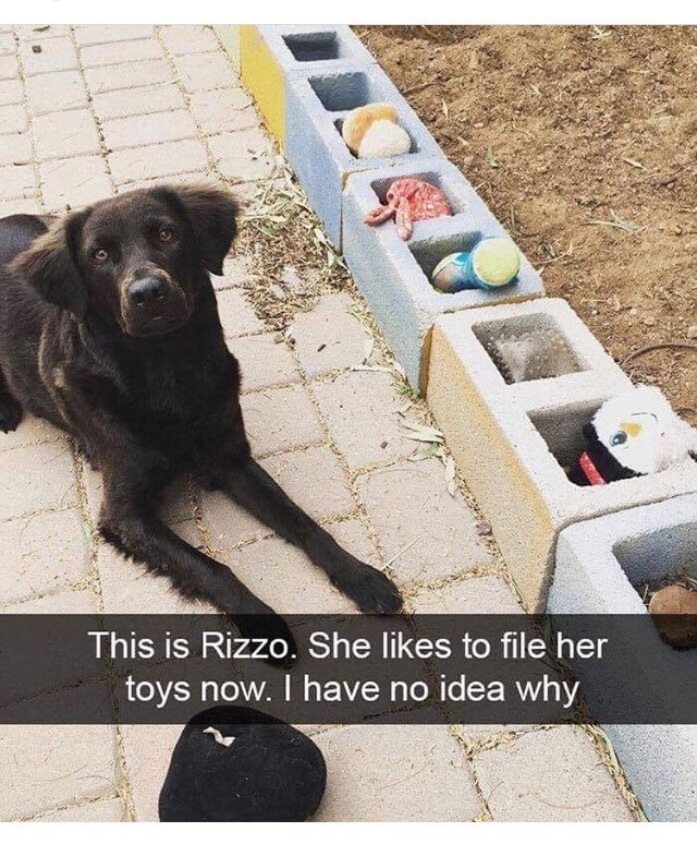cute animals - Dog - This is Rizzo. She likes to file her toys now. I have no idea why