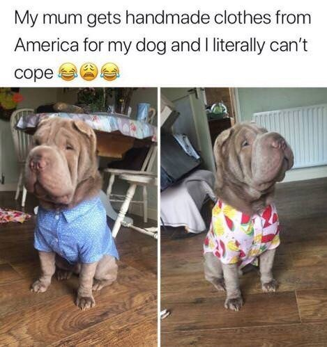 animal meme - Dog breed - My mum gets handmade clothes from America for my dog and literally can't cope