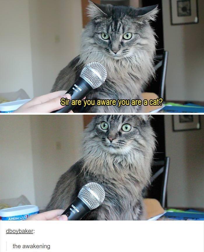 animal meme - Cat - Strare you aware youareacaf? TASCAM AMERICAS dboybaker: the awakening NC-T
