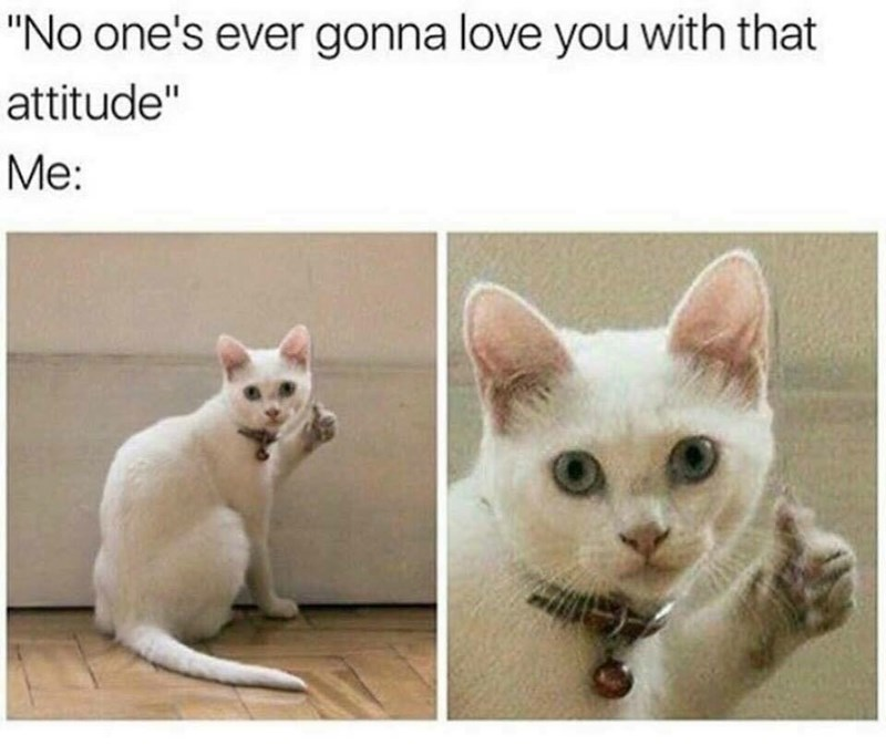 """animal meme - Cat - """"No one's ever gonna love you with that attitude"""" Me:"""