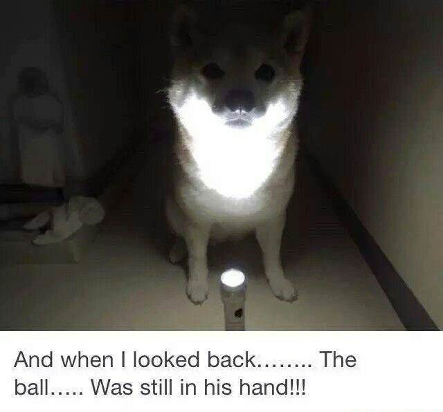 animal meme - Photo caption - And when I looked back.... The ball.. Was still in his hand!!!