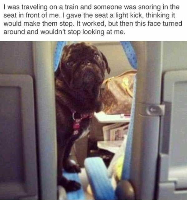 animal meme - Dog - I was traveling on a train and someone was snorinng in the seat in front of me. I gave the seat a light kick, thinking it would make them stop. It worked, but then this face turned around and wouldn't stop looking at me