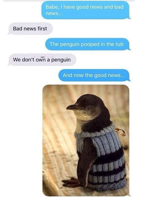animal meme - Bird - Babe, I have good news and bad news... Bad news first The penguin pooped in the tub We don't own a penguin And now the good news...