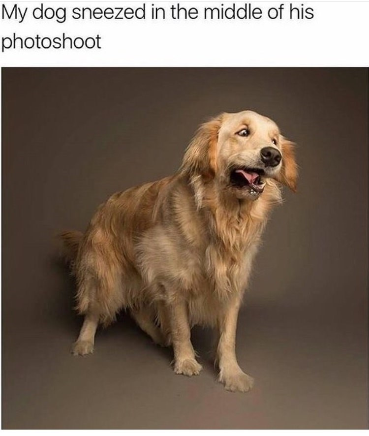 animal meme - Dog - My dog sneezed in the middle of his photoshoot