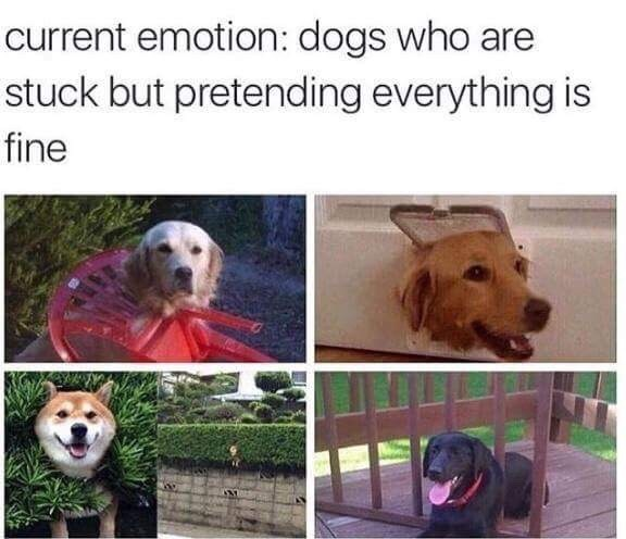 animal meme - Dog - current emotion: dogs who are stuck but pretending everything is fine