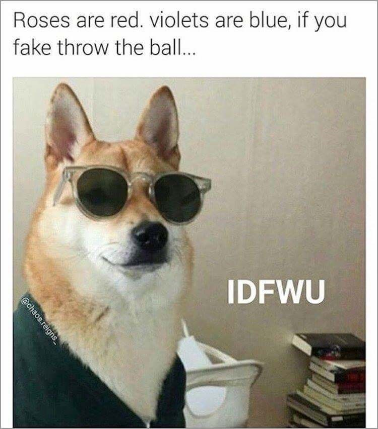 animal meme - Dog - Roses are red. violets are blue, if you fake throw the ball.. IDFWU @chaos.reigns