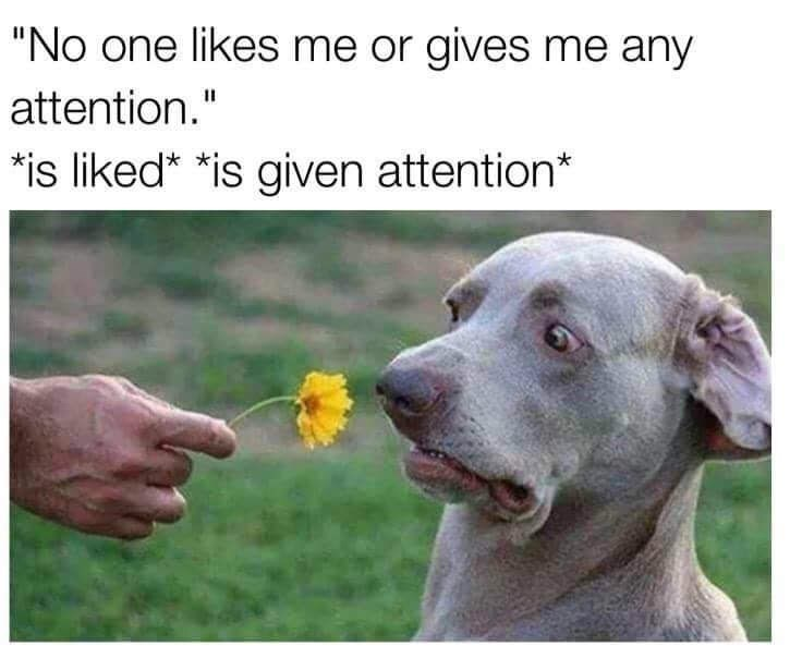 """animal meme - Dog - """"No one likes me or gives me any attention."""" is liked* *is given attention*"""