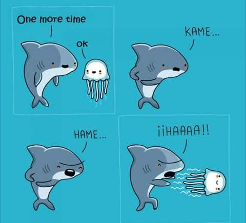 animal meme - Dolphin - One more time KАME.. Ok iiHAAAA!! HAME...