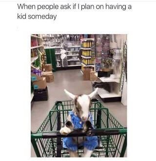 "Caption that reads, ""When people ask if I plan on having a kid someday"" above a pic of a baby goat in a shopping cart"