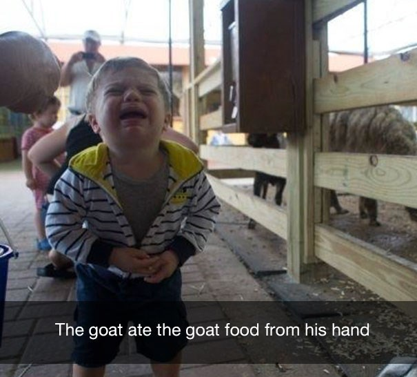 Cool - The goat ate the goat food from his hand