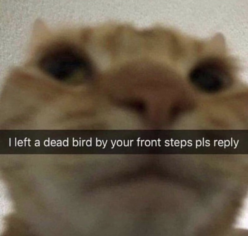 meme - Nose - I left a dead bird by your front steps pls reply